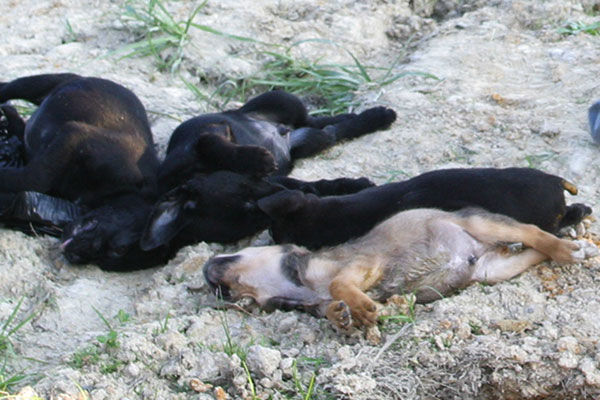 Dead puppies that PETA killed and threw into the garbage