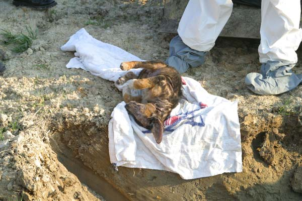 Stop Cats Killing Animals